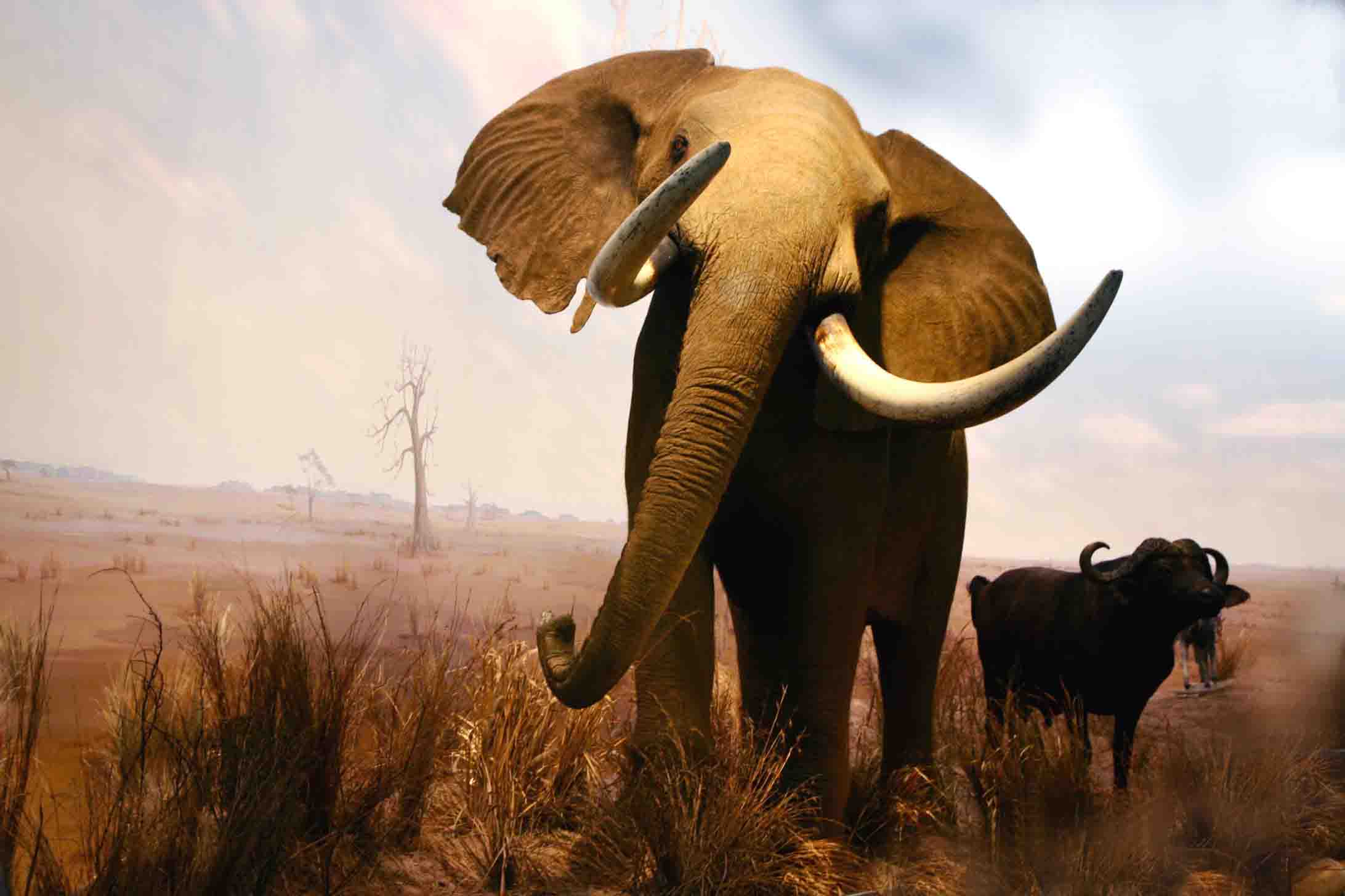 非洲动物图片大全