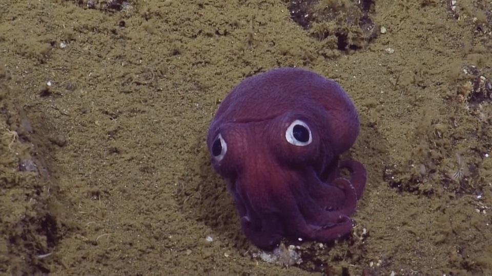 有趣的短视频 ZoominTV 来围观奇葩的章鱼~