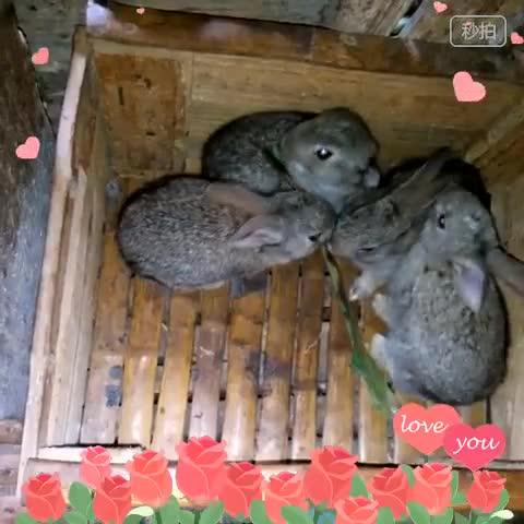 兔子动物园#视频合集_秒拍-10秒拍大片