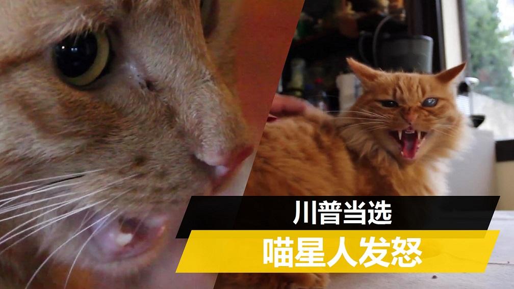 川普与动物对比
