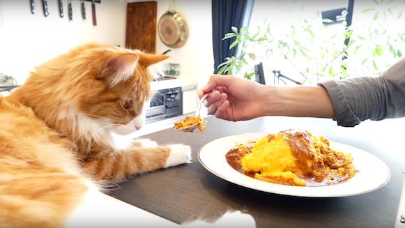 爷爱怀旧 YouTube每日视频精选 制作一份美味的日式鸡肉蛋包饭 微博@爷爱怀旧 爷爱怀旧