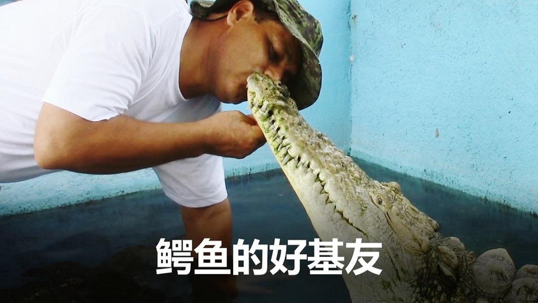 有趣的短视频 ZoominTV 有趣的短视频 Juan和Chuy是一对好基友,这不足为奇。但是...Chuy是条大鳄鱼!!!自从它8年前被拯救后,一直保持与人类的亲密交接触,从来不咬不闹。你想不想也来个鳄鱼的抱抱? ZoominTV
