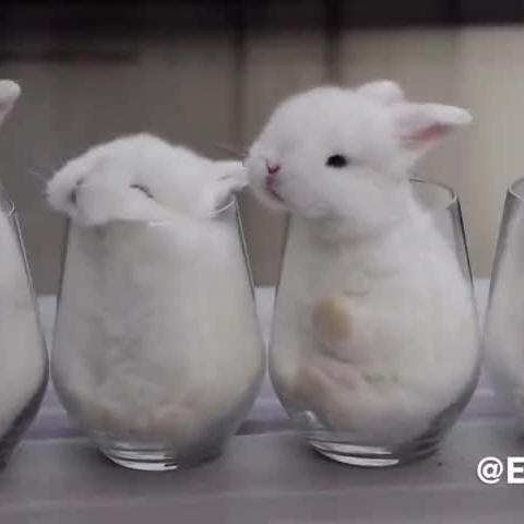 纸杯手工动物小兔子的图片大全