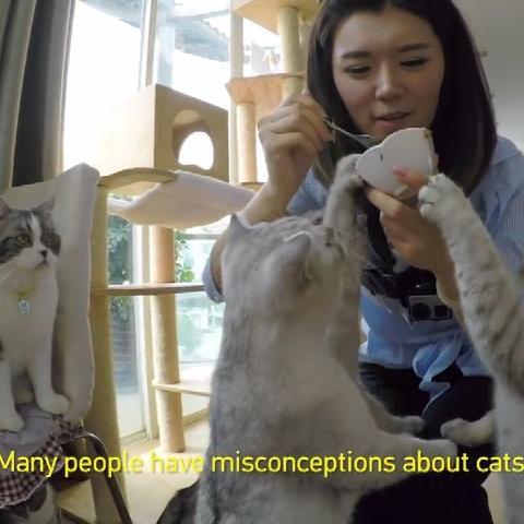萌宠 喵星人 探访上海的一家猫咪咖啡馆 微博@爷爱怀旧 萌宠 喵星人