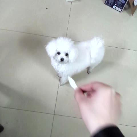 小疙瘩大智慧的秒拍视频