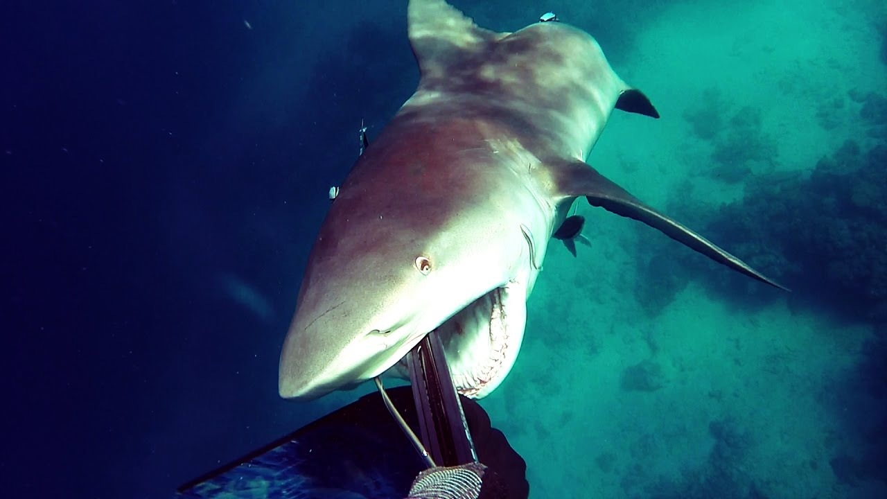 爷爱怀旧 游客在澳洲昆士兰潜泳遭遇牛鲨袭击